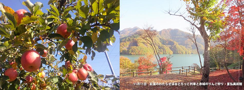 11月11日紅葉のわたらせ渓谷とろっこ列車と 赤城のりんご狩り・富弘美術館